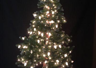 6 tree 2